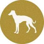 イタグレ<span>ItalianGreyhound</span>