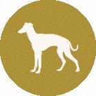 イタグレ<span>ItalianGreyhound</span>